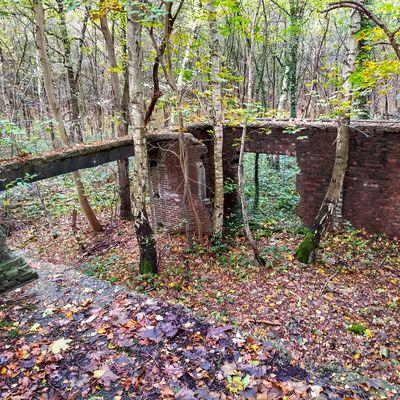 Fliegerhorst Urban Nature Autumn Ruined