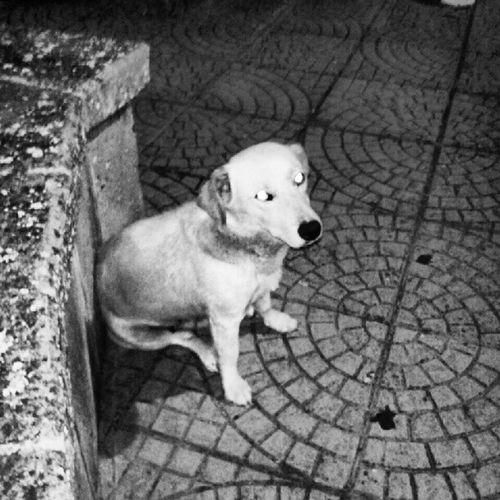 Questa non è una grande foto, ma per me Linda significa qualcosa Sennariolo Dog
