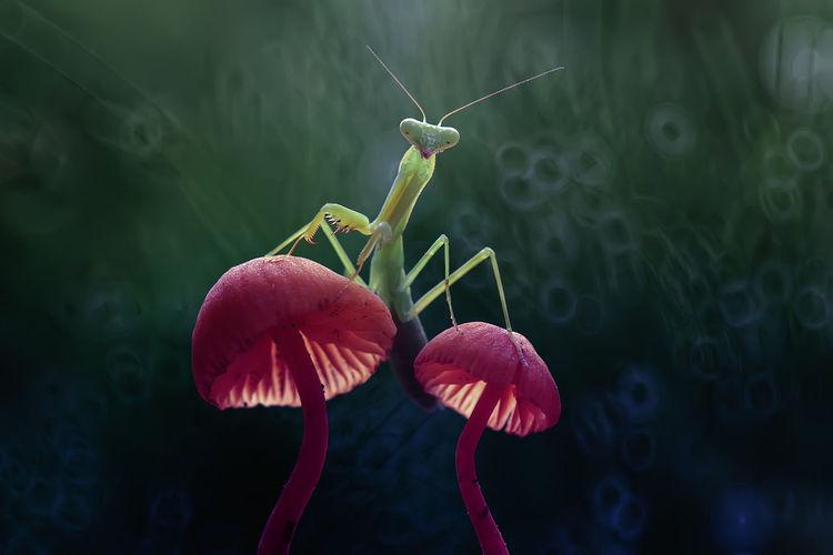Close-up of praying mantis on wild mushrooms
