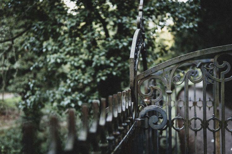 Metal gate against trees