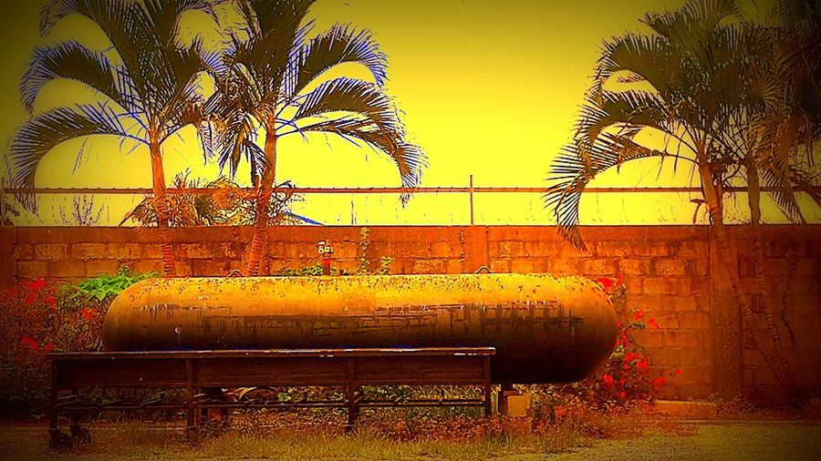 No People Orange Color Outdoors Palm Frond Palm Tree Propane Tank Sea Tank Vibrant Color