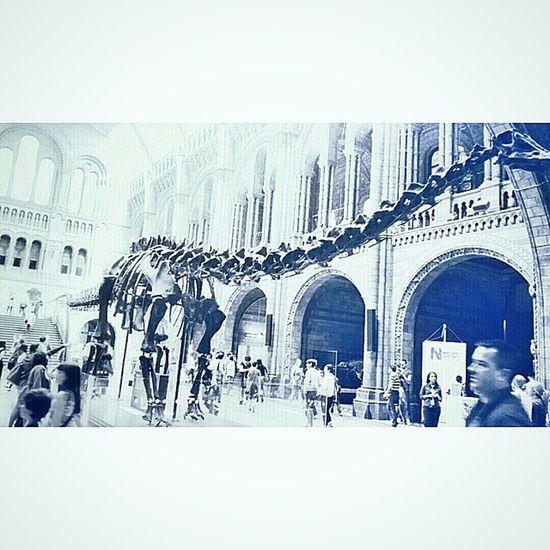 105 foot long cast of Diplodocus carnegii skeleton Andrew carnegie £2000 12 May 1905 Natural History Museum