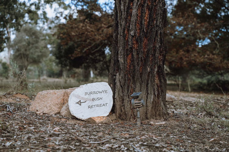 Text on tree trunk in forest