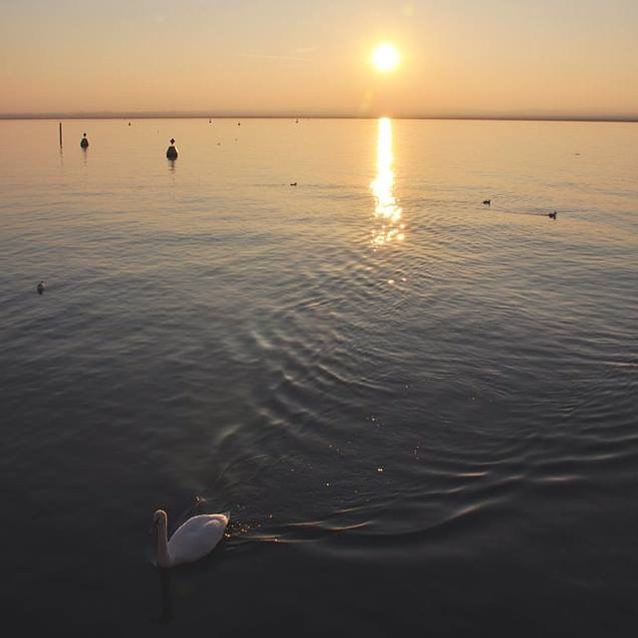 water, sunset, bird, sun, reflection, animal themes, tranquil scene, beauty in nature, scenics, wildlife, tranquility, sea, animals in the wild, orange color, silhouette, swimming, idyllic, nature, rippled, sunlight