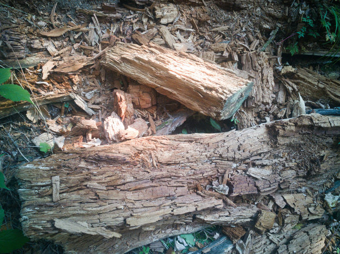 High angle view of log in forest