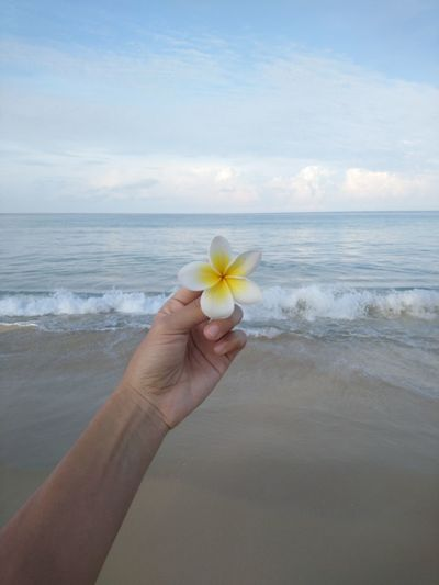 Flower in the hand by the sea Human Hand Flower Water Sea Beach Sand Summer Palm Wave Frangipani Coastal Feature Seascape Horizon Over Water