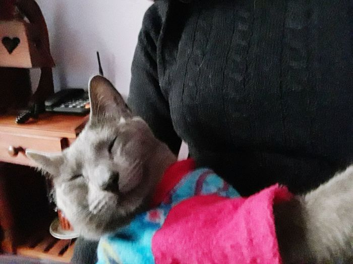 EyeEm Selects Gatitos Gatitoslindos Domestic Animals Gatitas🐱💕 Gatita❤ Gato😽 Gatos Gatos 😍 Gatitas Cat♡ Cat Lovers Gato Gatita  Cats 🐱 Gatita  Cats Cat