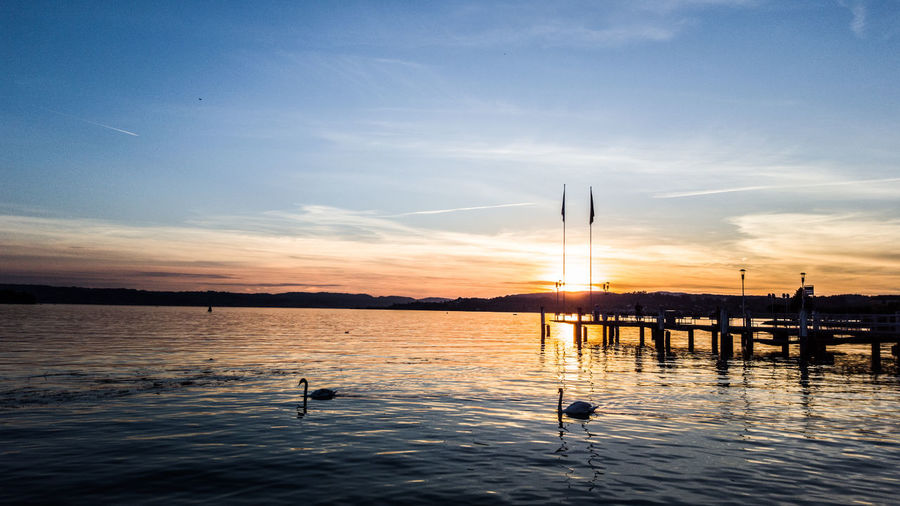 Silhouette swans swimming in lake against sky during sunset