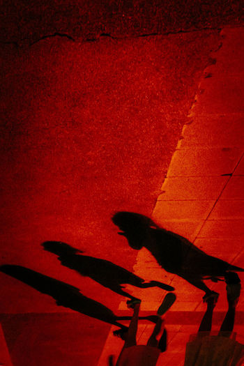 Red Shadow Real