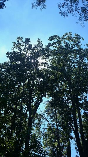 Nature Tree Sky Low Angle View Outdoors Beauty In Nature