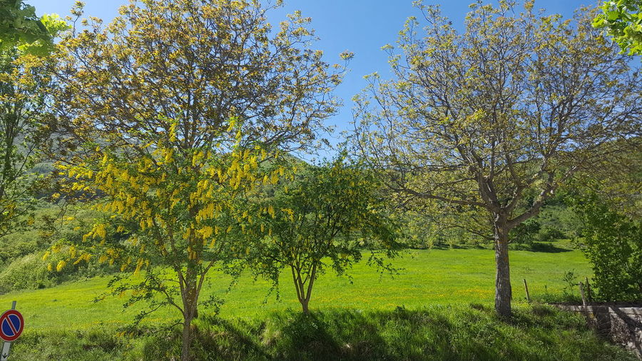 Beauty In Nature Environment Field Green Color Land Landscape Nature Non-urban Scene Outdoors Plant Scenics - Nature Spring Sunlight Tranquility Tree