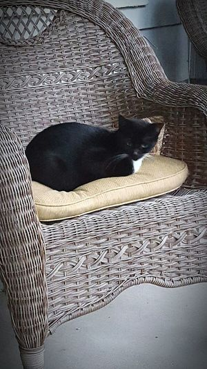Stella Cat♡ Cats 🐱 Hanging Out Check This Out Enjoying Life 2015  Hello World Taking Photos Cheese!