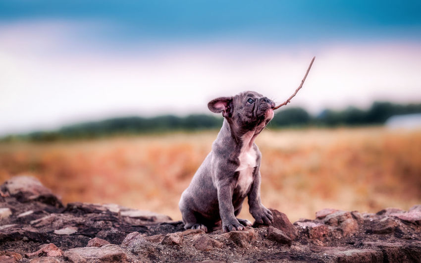 A little puppy i photographed last week EyeEm Best Shots Nature Taking Photos Animal Animal Themes Canine Dog Domestic Domestic Animals Focus On Foreground Full Length Land Looking Away Mammal Nature No People One Animal Rock Rock - Object Selective Focus Sitting Sky Small Solid