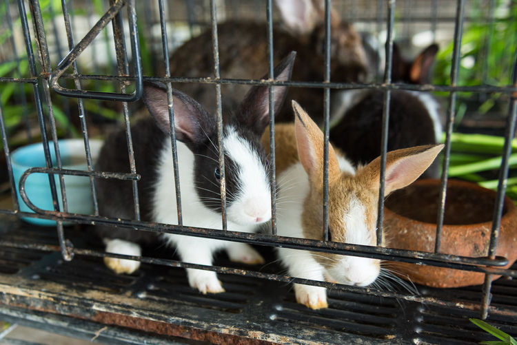 Close-up of rabbits in cage at zoo