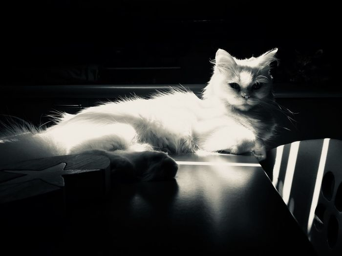 Cat Pets Mammal Domestic Cat One Animal Domestic Animal Themes Domestic Animals Feline Animal Indoors  No People Sitting Home Interior Nature Portrait Day Relaxation