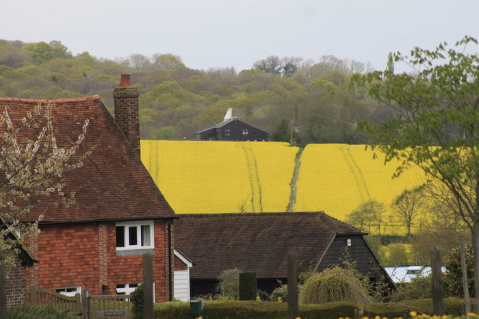 A rural scene in the English countryside of Kent, United Kingdom. Beauty In Nature Building Exterior Country Living Countryside England Kent No People Outdoors Rapeseed Rural Scene Yellow Yellow Color