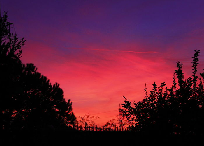 Tree Sunset Silhouette Nature No People Sky Outdoors Red Scenics Beauty In Nature Tranquility Multi Colored Tree Area Day