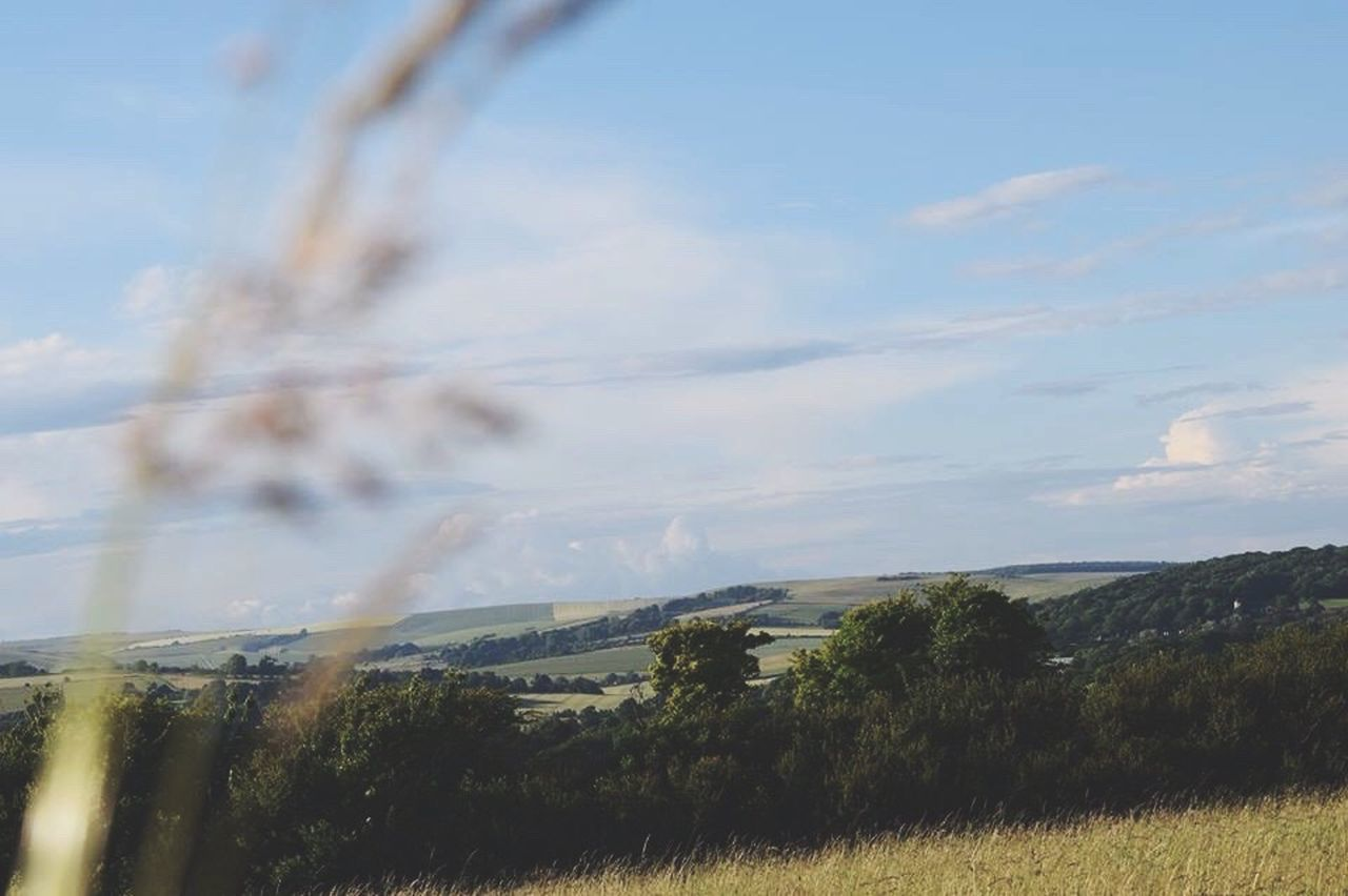 landscape, field, nature, sky, no people, tree, day, beauty in nature, scenics, tranquil scene, growth, tranquility, outdoors, grass, rural scene