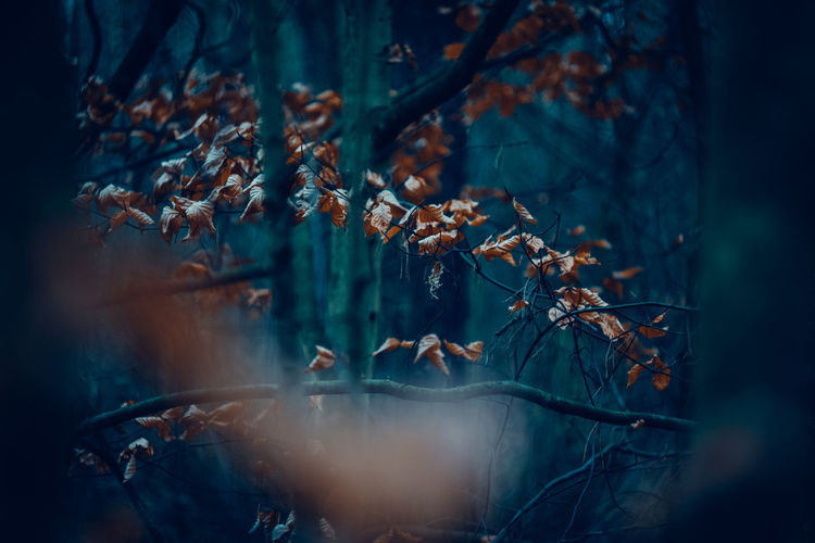 Exceptional Photographs Silhouette EueEm Nature Lover Eye4photography  Bokehlicious Bokeh Photography EyeEm Nature Lover EyeEmBestPics WoodLand Spacer Poland Tree Forest Pinaceae Close-up Spruce Tree Leaves Bare Tree Branch Birch Tree Woods Tree Trunk