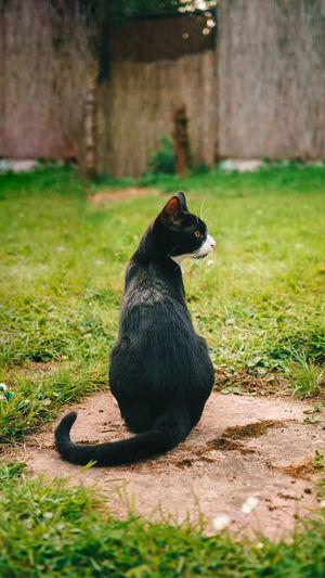 Black cat sitting on field