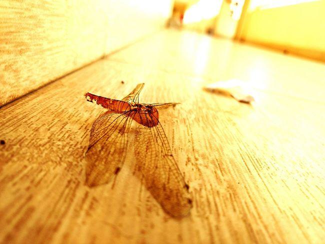 Sad Its A Dead Dragon Fly