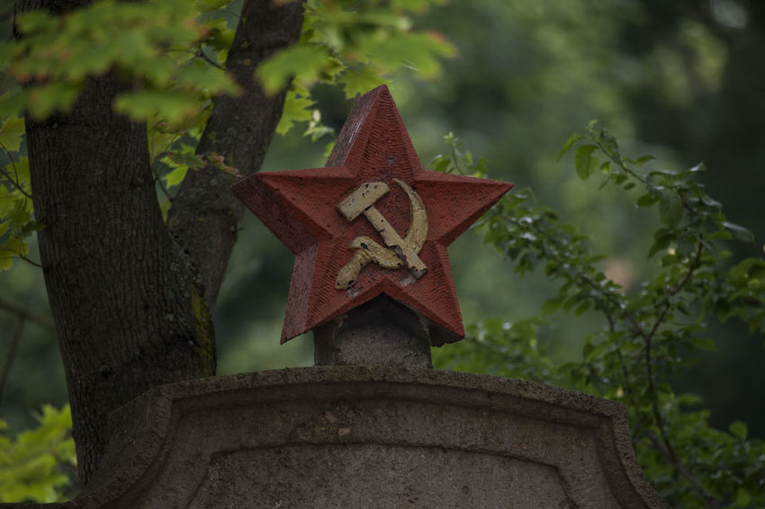 lonesome red star with hammer and sickle on headstone at graveyard for fallen russian soldiers Russia Sovjet Monument World War 2 Art And Craft Close-up Craft Cross Day Decoration Focus On Foreground Green Color Growth Headstone Leaf Low Angle View Nature No People Outdoors Plant Red Red Star With Hammer And Sickle Religion Russian Russian Memorial Second World War Shape Star Shape Tombstone Tree