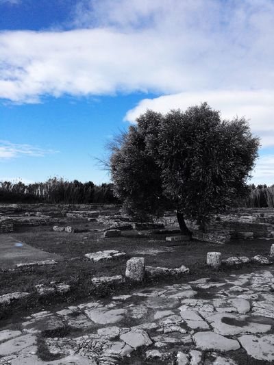 Blue sky in Paestum 🇮🇹 Blue Italy Food Cheese! Relaxing Holiday Taking Photos Sky