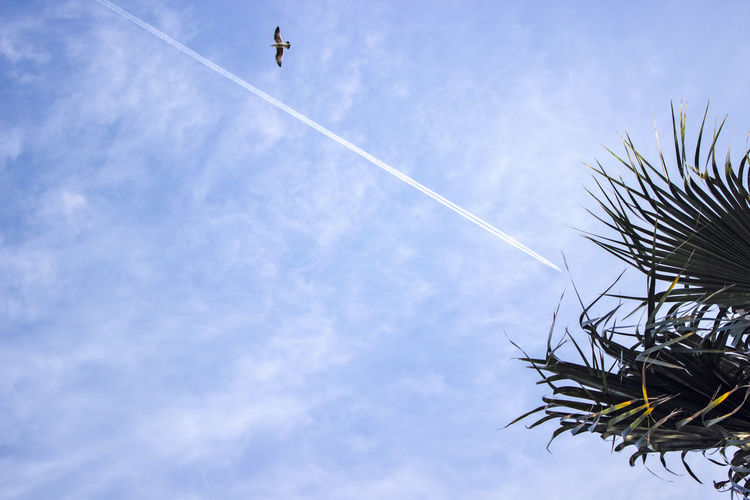 Sky of Málaga Flying High Holiday Light Malaga Moment Nature Palm Plane Relaxing SPAIN Bkue Blue Blue Sky Cloud - Sky Day Flying Nature Palm Leaf Plant Relax Sky Summer Tree