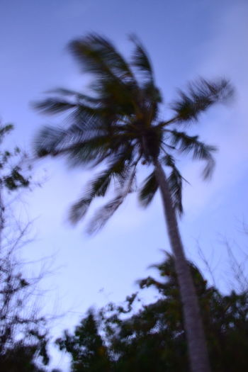 Nature Palm Tree Sky No People Outdoors Beauty In Nature Tree Maldives Wonderful_places Wonderful World Wind Power Lieblingsteil EyeEmNewHere Resist