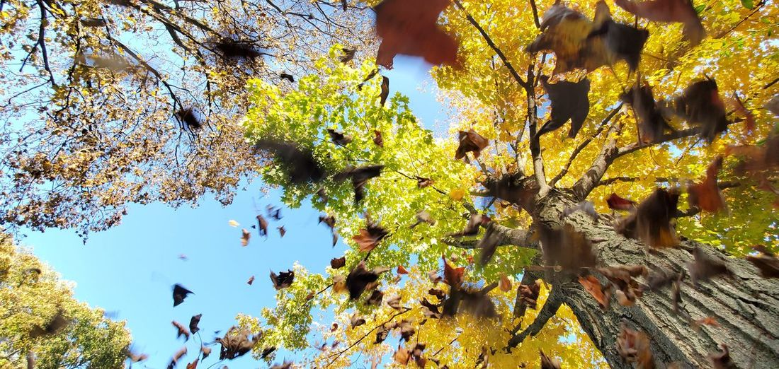 Low angle view of autumn leaves on tree against sky