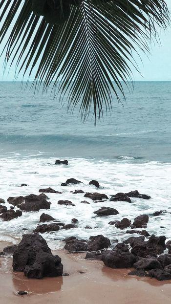 Seaside Beach Horizon Over Water Sand No People Nature Tranquility Water Sky Wave Outdoors Beauty In Nature Palm Tree Day Scenics Tree Close-up EyeEmNewHere EyeEmNewHere