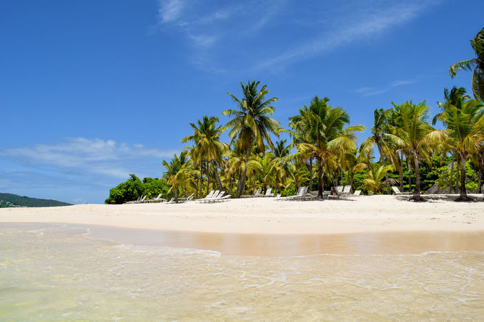 Beautiful island in the caribbean sea with white sand, turquoise water and lots of palms Dominican Republic Bacardi Island Beach Beauty In Nature Blue Blue Sky Cayo Levantado Coconut Trees Lagoon Nature No People Outdoors Palm Tree Paradise Sand Scenics Sky Summer Sun Tranquil Scene Tranquility Tree Tropical Vacation Water