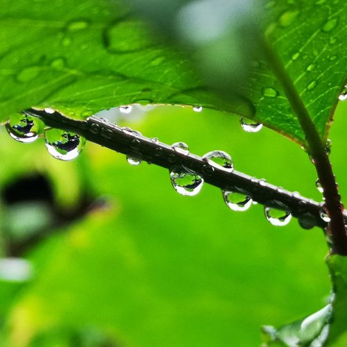 Water droplets hang on branches after a rain shower Water Leaf Drop Close-up Grass Green Color Plant RainDrop Monsoon Splashing Droplet Rainy Season Rain Blob Rainfall