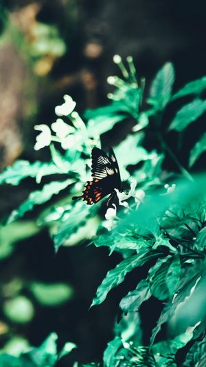 High angle view of butterfly pollinating flower