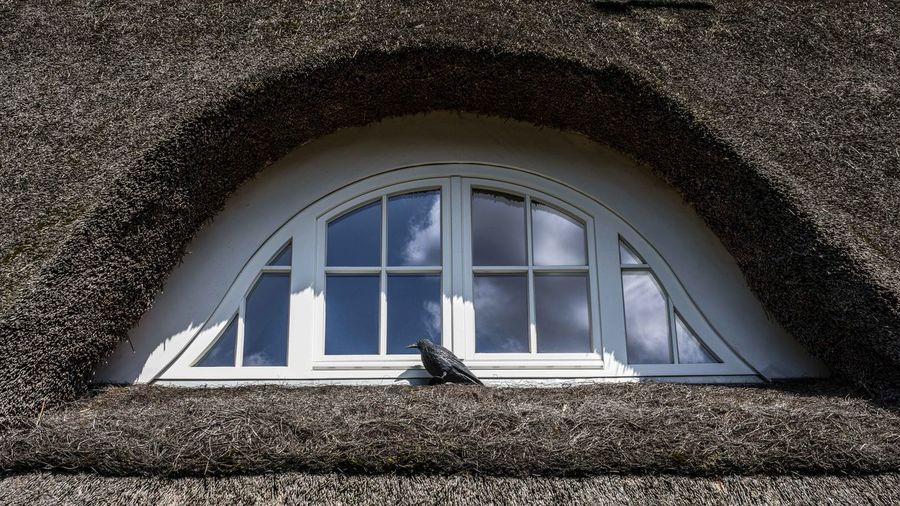 View of bird perching on window of building