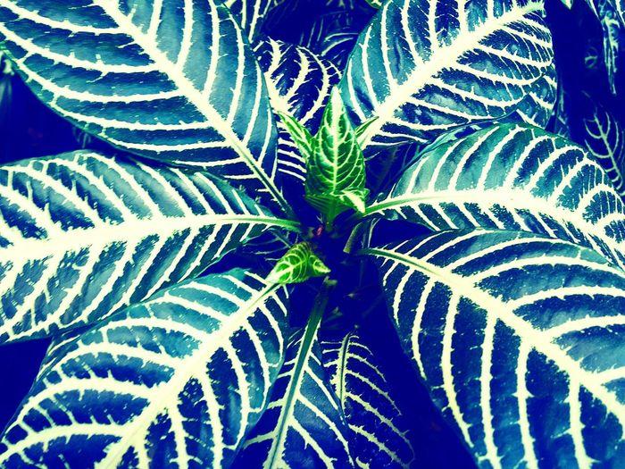 Earthday; Green; Newgrowth; New Life; Livingthings