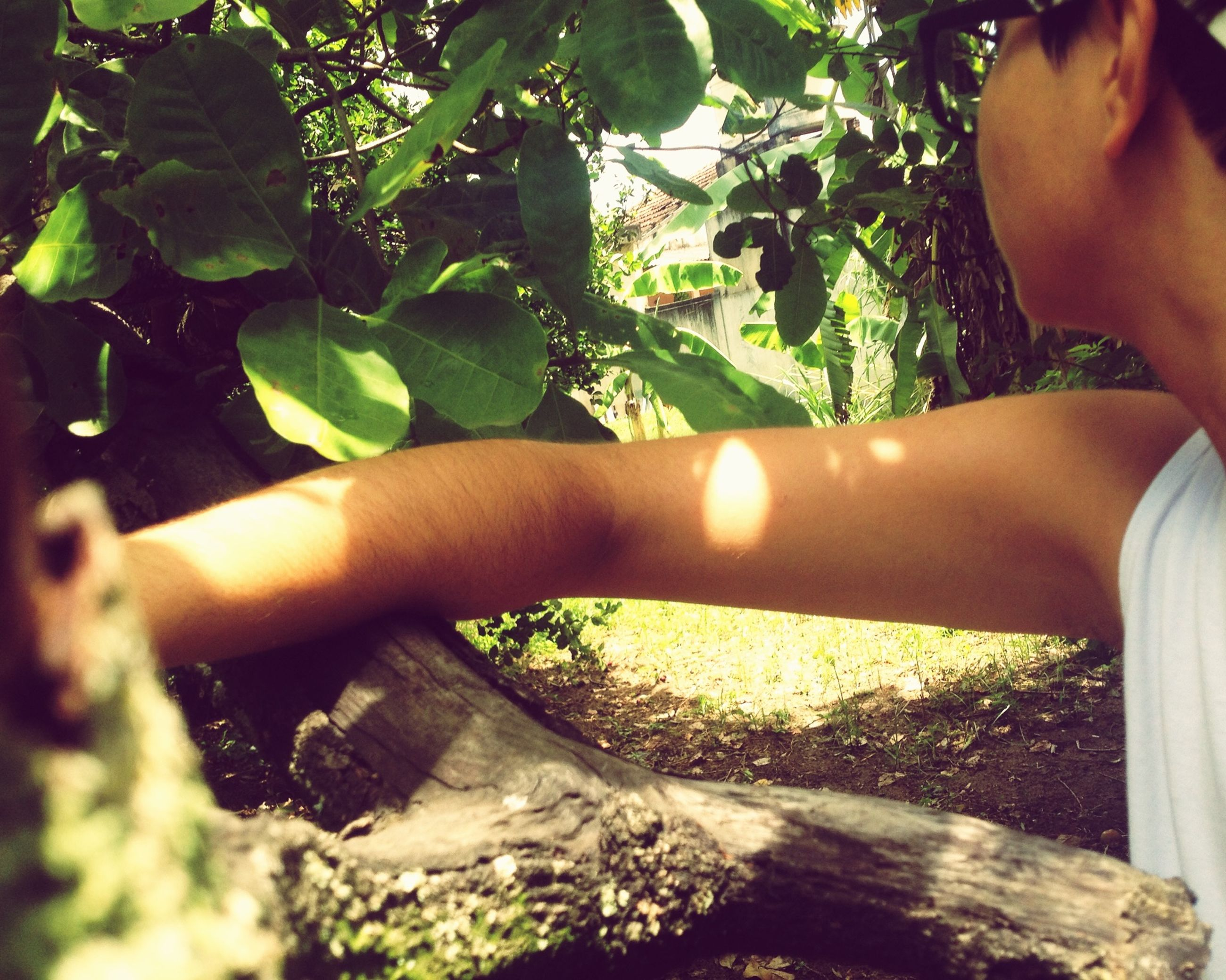 lifestyles, person, part of, leisure activity, cropped, tree, sunlight, holding, close-up, leaf, personal perspective, growth, low section, human finger, green color, day