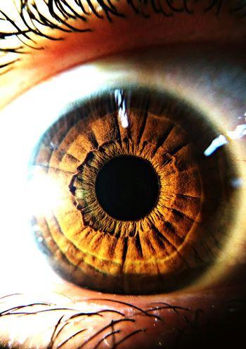 Eyes Brown Eyes Photo