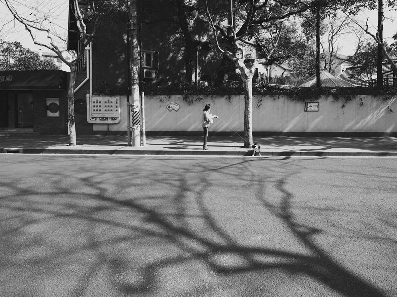 Walking The Dog Pavement Tree Real People Shadow Day Architecture Built Structure Outdoors Lifestyles Building Exterior One Person Full Length People Street Photography The Street Photographer - 2017 EyeEm Awards