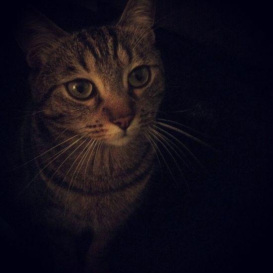 My love... Cat Instacat Gabin Vscocam