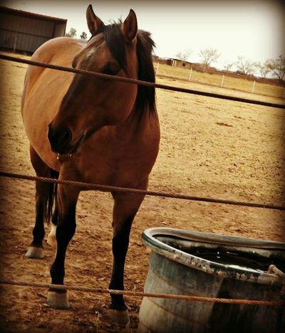 I Love Horses Animal Photography Horse Life Animalposing Horses Farm Animals Animal_collection