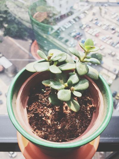 EyeEm Gallery EyeEm Nature Lover Small Plants Green Green Green!  Officeplants Food And Drink Table Indoors  Nature Plant