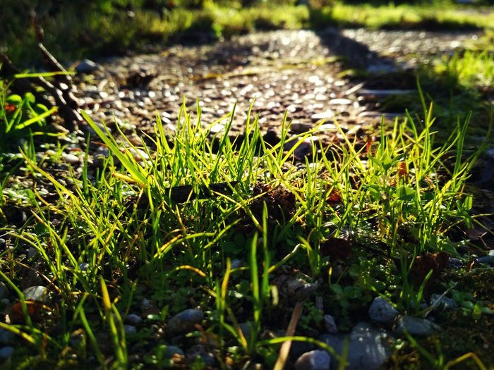 Nature Grass Day Outdoors Growth No People Close-up Beauty In Nature Sunlight Afternoon