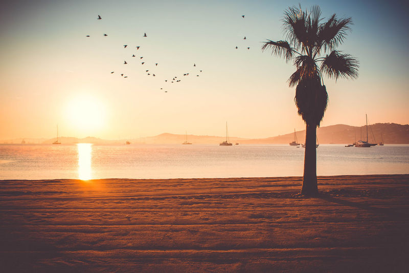 sunrise | Côte d'Azur Animal Themes Animals In The Wild Beach Beauty In Nature Bird Flock Of Birds Flying Large Group Of Animals Mid-air Migrating Nature No People Outdoors Palm Tree Sand Scenics Sea Silhouette Sky Sun Sunset Tranquil Scene Tranquility Tree Water