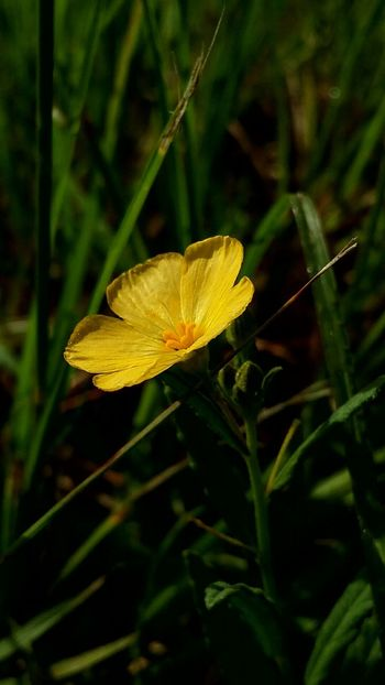 Nature Photography Goldenhour Wild Flowers Flower Collection Flowers, Nature And Beauty Creative Light And Shadow
