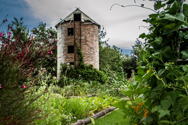 Vegetable garden with tower Food Beans Tower Stellenbosch South Africa Vegetable Garden Land Building Green Color Cloud - Sky Plant Part Outdoors Leaf No People Day Plant Building Exterior Built Structure Architecture Growth Nature Sky Deterioration