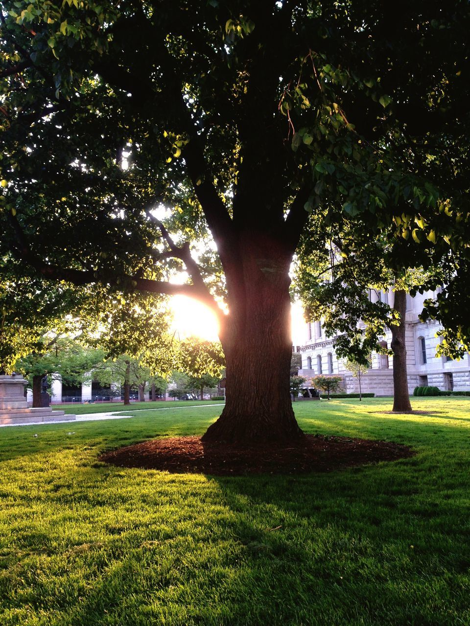 tree, grass, tree trunk, growth, sunlight, branch, park - man made space, green color, tranquility, sunbeam, park, nature, tranquil scene, field, beauty in nature, lawn, day, growing, scenics, outdoors, grassy, garden, back lit, no people, solitude, grass area