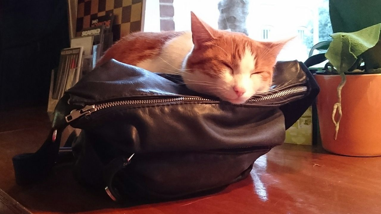 Close-Up Of Cat Sleeping On Hand Bag