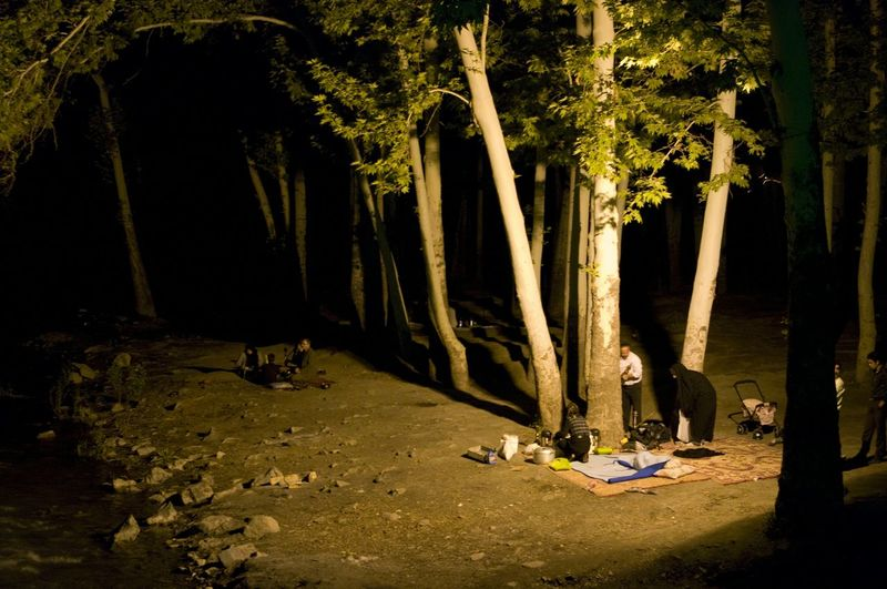 Picnic Night Travel Wonderful Simple Life Trees Lighting Woods Eyems Crazy Pics Hanging Out Gallery? Why Green
