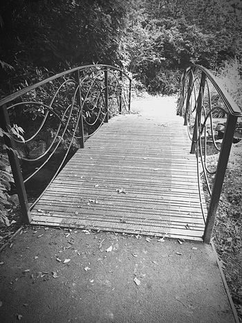 Across Black & White Bridge Flowers,Plants & Garden IPhoneography Outdoor Photography Colourless Tones